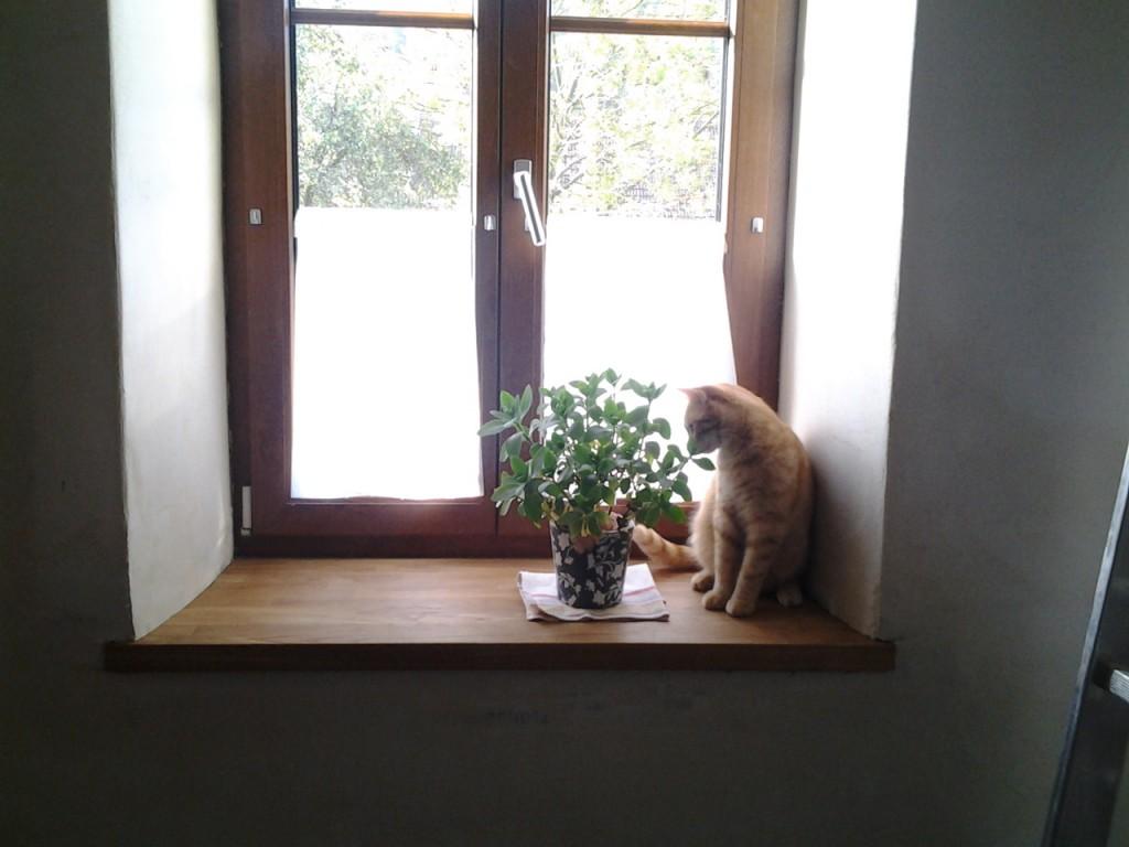 Juhu! Eine Fensterbank!