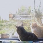 Gefahrlose Fenster-Annäherung